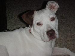 white dog daisy